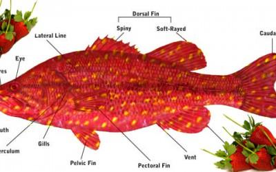 FishAnatomy